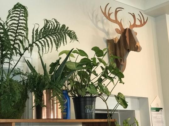 Botanist deer